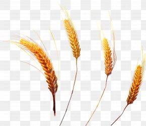 Wheat - Grasses Megabyte Clip Art PNG