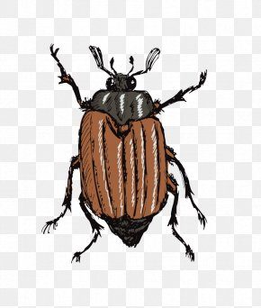 Beetle - Insect Drawing Stock Photography Illustration PNG