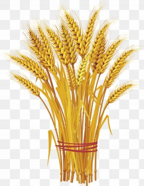 Wheat PNG - Like A Bundle Of Reeds: Why Unity And Mutual Guarantee Are Today's Call Of The Hour Wheat Clip Art PNG