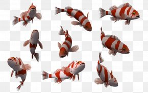 Fish 10 - The Legend Of Zelda: Ocarina Of Time 3D 3D Computer Graphics Fish Raymarine Plc PNG