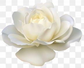 Beautiful White Rose Image - Rose White Clip Art PNG
