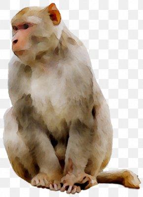 Ape Old World Monkeys Baboons PNG