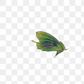 Butterfly,insect,specimen - Butterfly Insect Wing Clip Art PNG