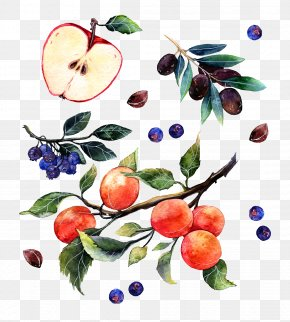 Watercolor Apple Grapes And Oranges - Watercolor Painting Illustrator Poster Illustration PNG