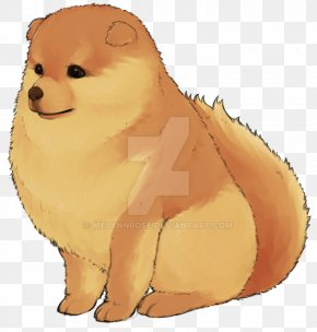 Puppy - Pomeranian Puppy Dog Breed Whiskers Non-sporting Group PNG