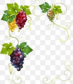 Vector Painted Grapes Border - Wine Grape Divertimento Clip Art PNG