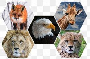 Wild Animal - Animal Cheetah Wildlife Cat Lion PNG