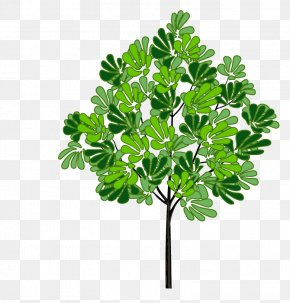 Spring Tree - Tree Download Clip Art PNG