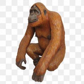 Orangutan - Gorilla Chimpanzee Orangutan Primate Monkey PNG