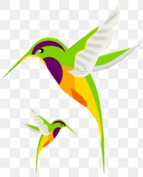 Hummingbird Drawing Stock Photography Clip Art PNG