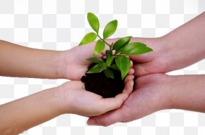 Care Of Green Planting Work Together - China Management Consulting Business Baidu PNG