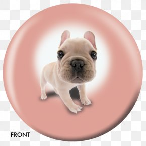 Puppy - French Bulldog Toy Bulldog Puppy Dog Breed Companion Dog PNG