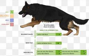 German Shepherd Dog - German Shepherd English Toy Terrier Australian Shepherd Puppy Siberian Husky PNG
