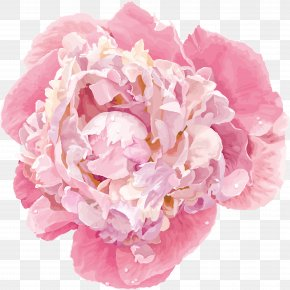 Peony - Chinese Peony Flower Vector Graphics Clip Art PNG