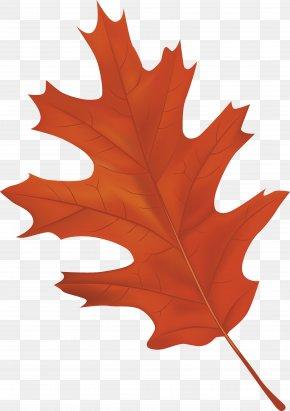 Brown Autumn Leaf Clipart Image - Autumn Leaf Color Clip Art PNG
