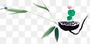 Lotus Seeds - Tao Te Ching Buddhism Lotus Seed Zen Master PNG
