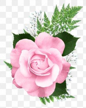 Pink Rose Transparent Picture - Rose Pink Clip Art PNG