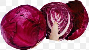 Beet Cabbage - Red Cabbage Pink Purple Magenta Vegetable PNG
