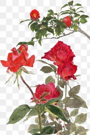 Rose - Garden Roses Centifolia Roses Rosa Chinensis Memorial Rose Beach Rose PNG
