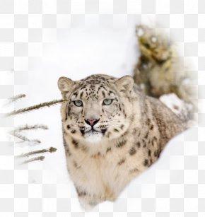 Leopard - Snow Leopard Steemit Big Cat Earth PNG