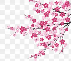 Cherry Blossom - Cherry Blossom Image Clip Art Illustration PNG