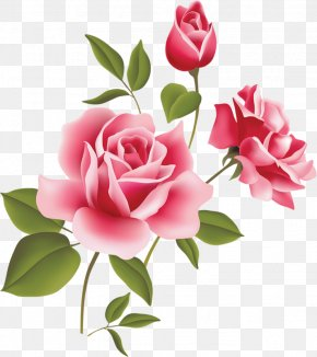 Pink Rose Art Picture Clipart - Rose Pink Clip Art PNG