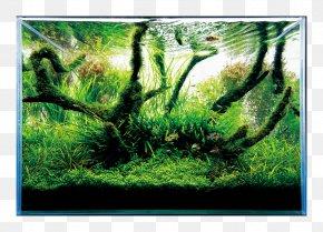 Fish - Nature Aquarium World Aquascaping Aqua Design Amano Aquarium Filters PNG