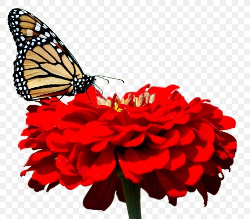 Butterfly Desktop Wallpaper 1080p High Definition Television