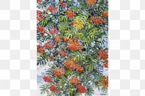 Flower - Flower Tree Shrub PNG