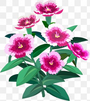 Plant - Peony Floral Design Herbaceous Plant Annual Plant Magenta PNG