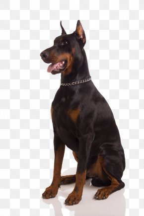 Tongue Black Dog - Dobermann Rottweiler Bulldog Puppy Pet PNG