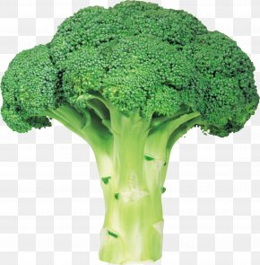 Broccoli Image With Transparent Background - Broccoli Vegetable PNG