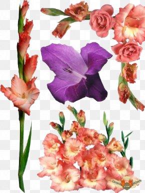 Gladiolus File - Raster Graphics Gladiolus Xd7gandavensis PNG