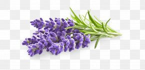 Perennial Plant French Lavender - Lavender Flower PNG