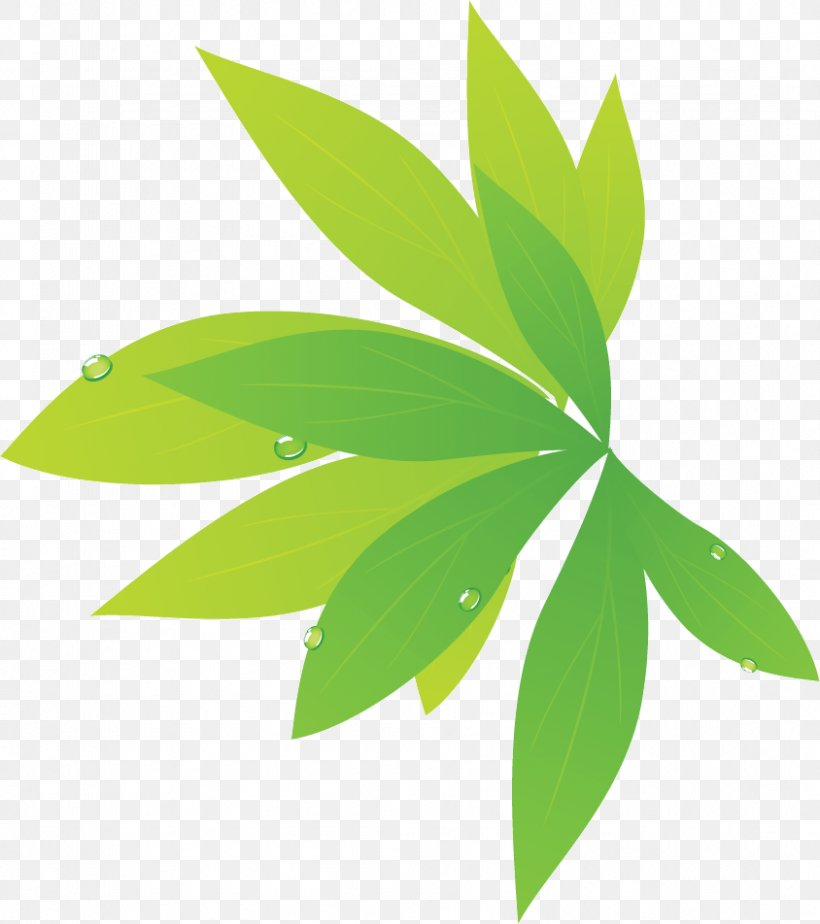 Leaf Photography Plant Stem, PNG, 844x952px, Leaf, Accommodation, Black And White, Gratis, Green Download Free