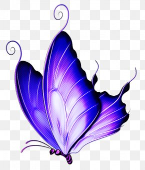 Ornament Wing - Butterfly Violet Purple Insect Moths And Butterflies PNG