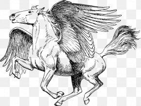 Pegasus - Medusa Poseidon Perseus Coloring Book Pegasus PNG