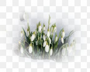 Amaryllis Family Arum Family - Floral Spring Flowers PNG