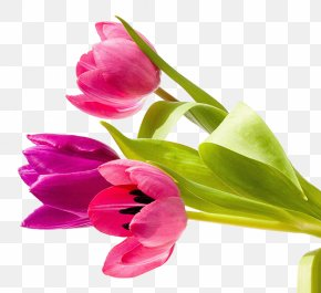 Tulip Flowers - Job Greeting Card Wish Message PNG