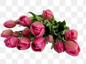 Rose Red Tulips - Flower Bouquet Stock.xchng Clip Art PNG