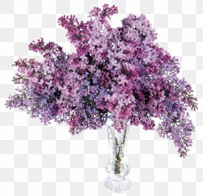 Transparent Vase With Lilac Picture - Lilac Computer File PNG