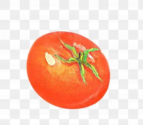 Nightshade Family Cherry Tomatoes - Tomato Cartoon PNG