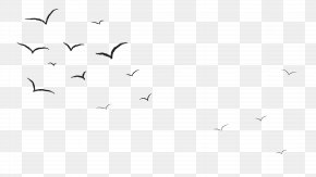 Fly - Bird Crane Black And White Animal Migration Monochrome Photography PNG