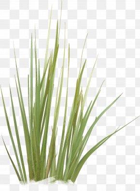 Green Grass - Green Grasses Plant Stem Family PNG