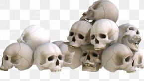 Skull - Skull Bone Skeleton PNG