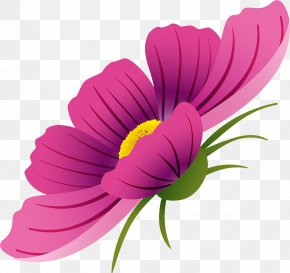 Cosmos Flower - Flower Drawing Watercolor Painting PNG