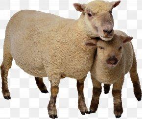 Goat - Sheep Goat Cattle Clip Art PNG