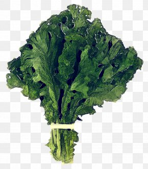 Rapini Spring Greens - Leaf Vegetable Vegetable Collard Greens Cruciferous Vegetables Leaf PNG