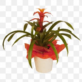 Potted Tropical Plants List - Cut Flowers Floristry Flowerpot Houseplant PNG
