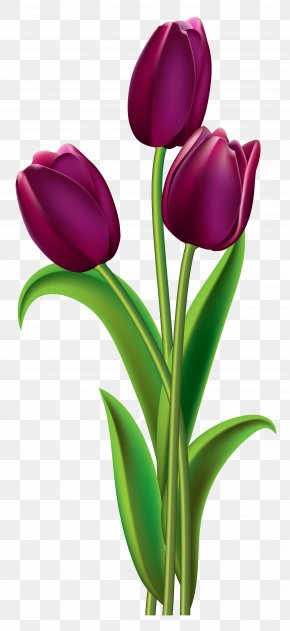 Tulips Transparent Clipart Picture - Indira Gandhi Memorial Tulip Garden Red Clip Art PNG